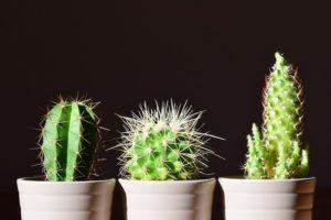 cactus-macetas