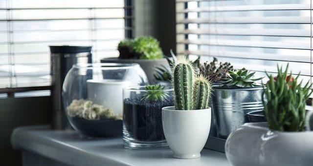 Cómo trasplantar un cactus