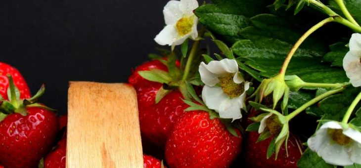 Fresas en macetas o jardineras