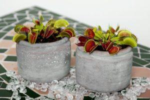 plantas_carnivoras_1