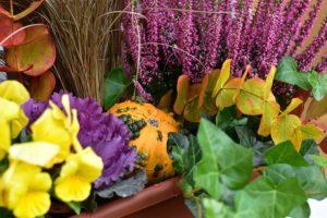 Calendario de Noviembre plantas