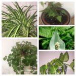 Clásicos básicos plantas de interior