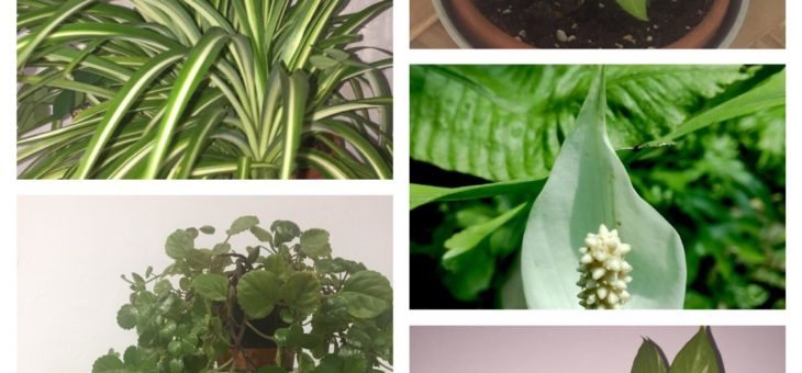 Clásicos básicos de las plantas de interior
