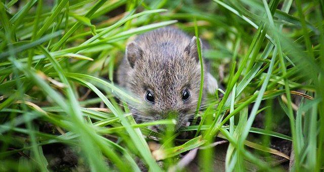 Claves para prevenir plagas de roedores en tu jardín