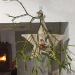 Plantas tóxicas Muérdago
