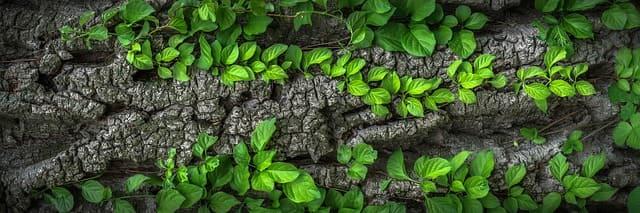 Uso de madera en jardines