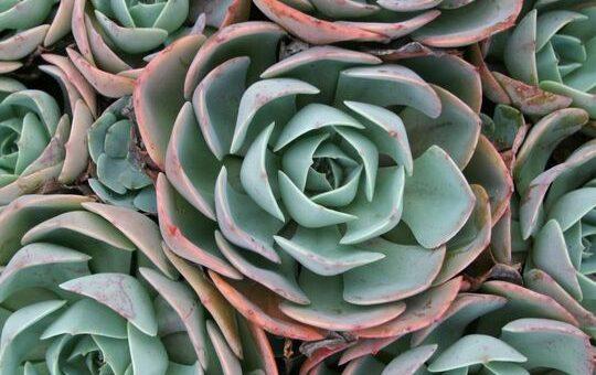 Cuidados de las plantas suculentas