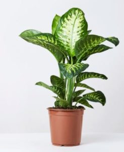 Plantas tóxicas planta verde