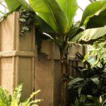 Tendencia en plantas de interior