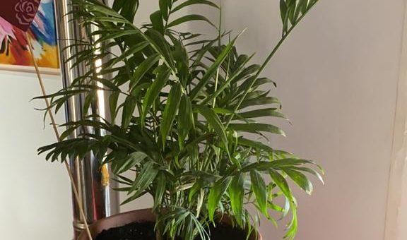 Plantas tropicales de interior